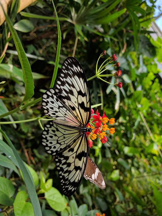 Butterfly, Nature, Insect, Wing, Outdoors
