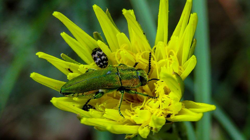 Free photo insect yellow nature yellow flower petals yellow max pixel insect yellow flower yellow nature petals yellow mightylinksfo