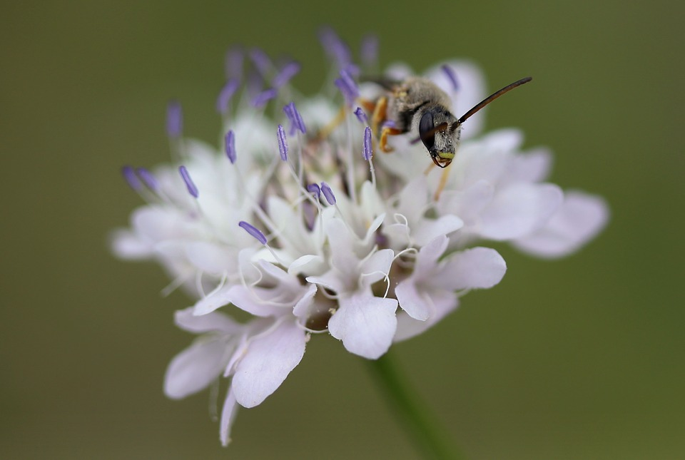 Flower, White, Wasp, Insecta