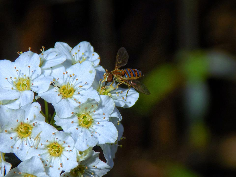Insect, Flower, Nature, Animal, Bloom, Insects, Bee