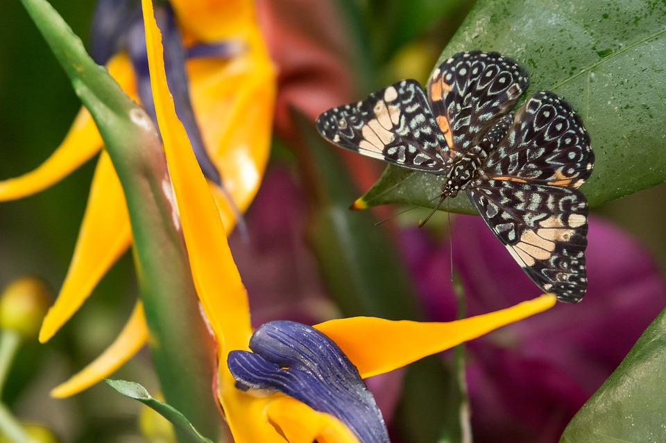 Butterfly, Insects, Nature, Flower, Letter, Color, Fly