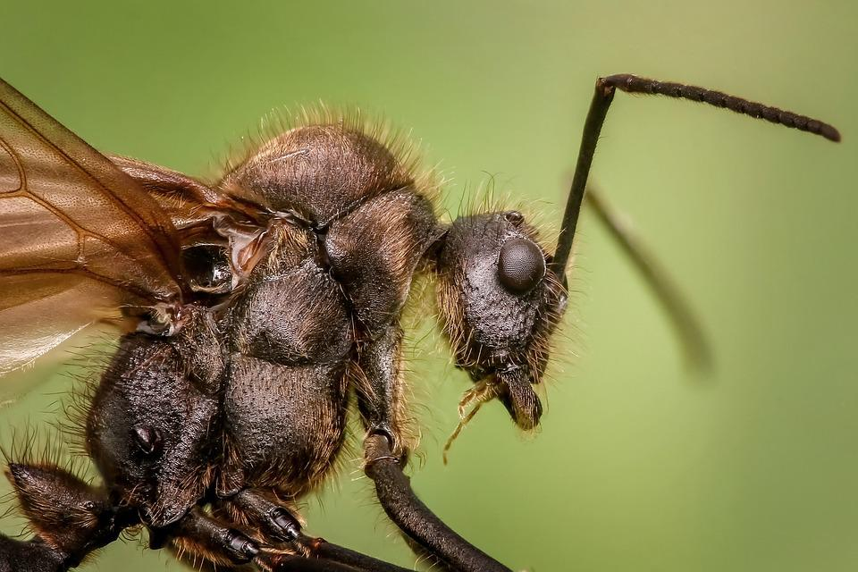 Ant, Insects, Macro, Animal, Small, Close Up, Creepy