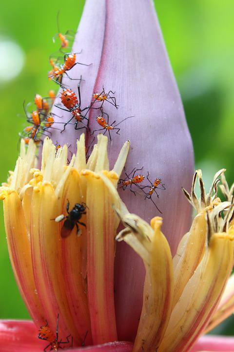 Flower, Nature, Plant, Insects, Ants, Garden