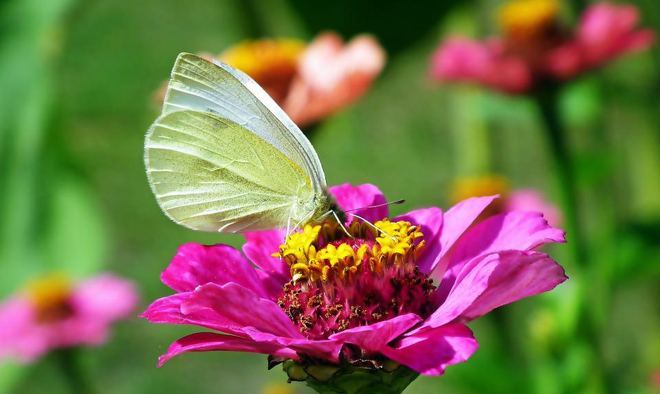 Butterfly, Insects, Flower, Butterfly Wings