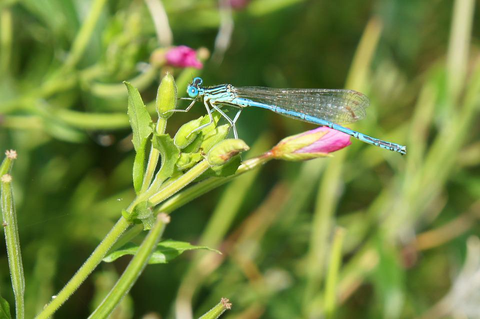 Dragonfly, Insects, Nature, Outdoors, Macro, Green