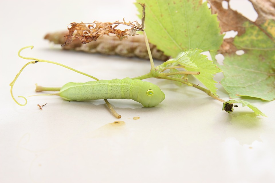 Worms, Green, Insects, Little Worm