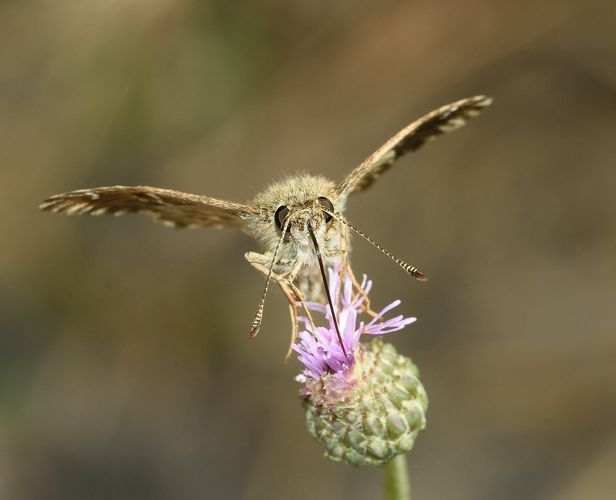 Insects, Butterfly, Moth, Macro
