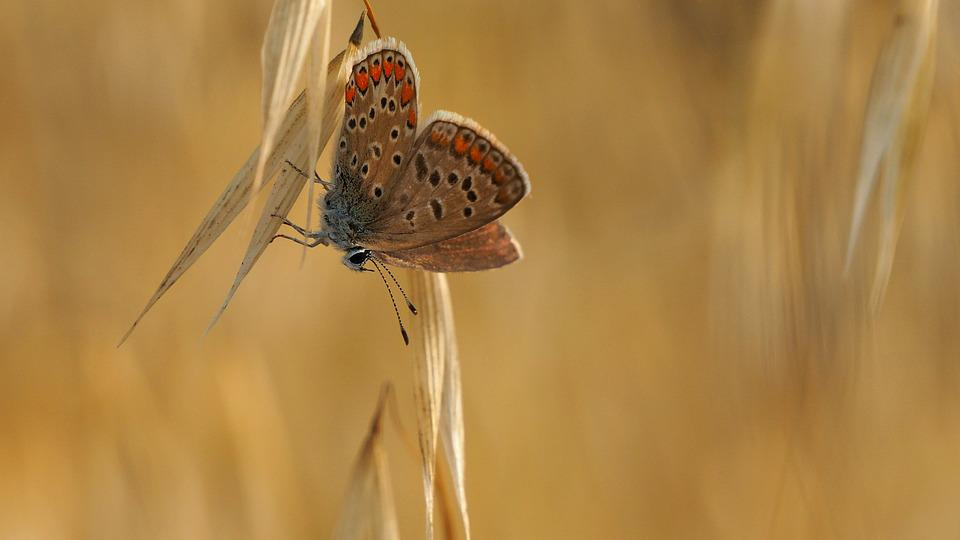 Nature, Insects, Butterfly, Macro