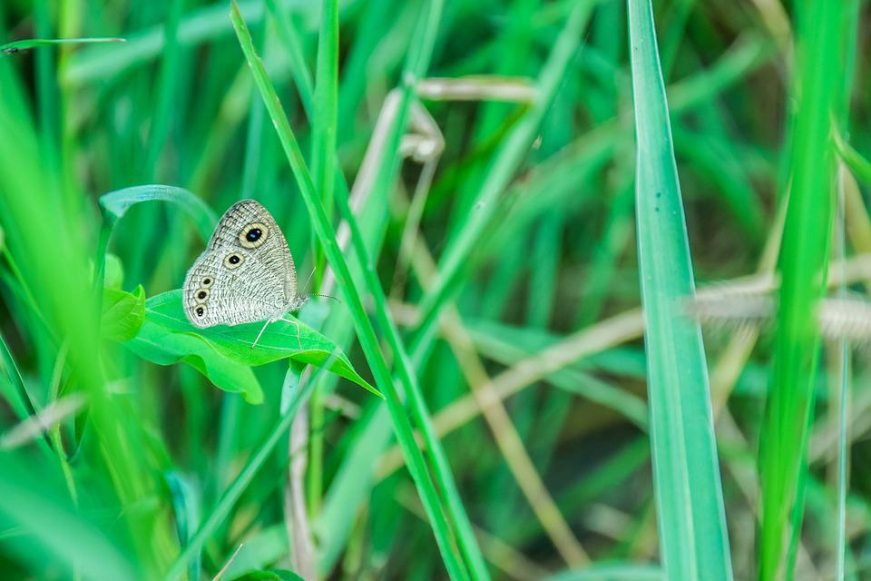 Butterfly, Insects, Nature, The Forests