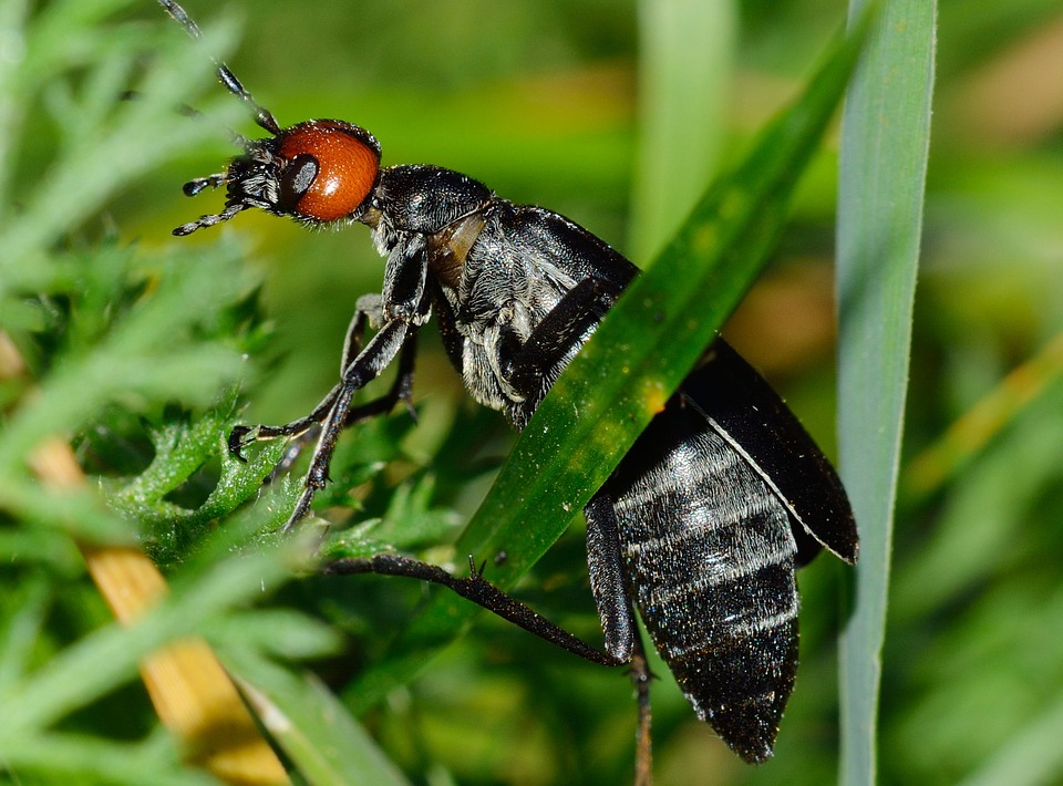Insects, Beetles, Nero