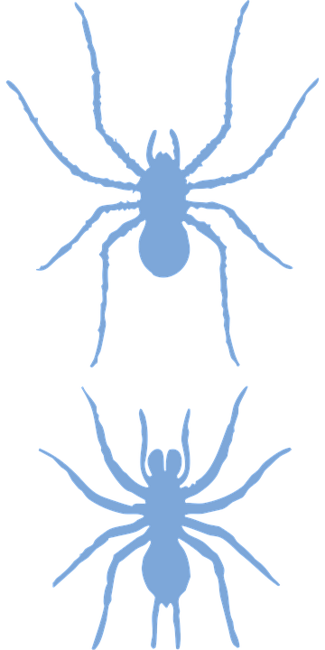 Spiders, Animals, Silhouette, Insects, Wildlife