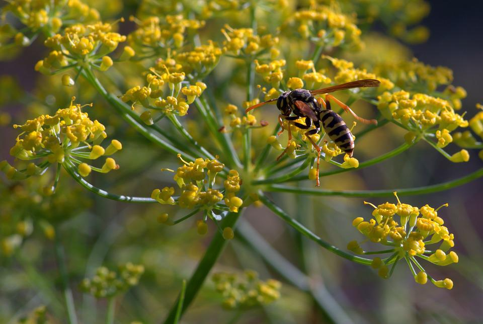 Free photo Insects Yellow Garden Osa Flower Insect Macro - Max Pixel