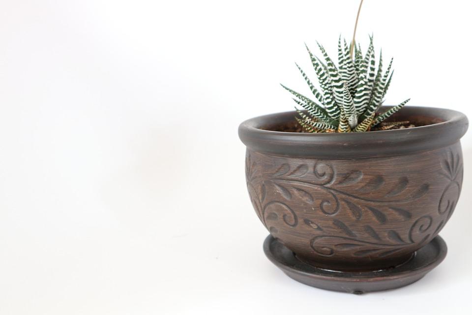 Desktop, Pot, Succulent, Interior, Green, White, Modern