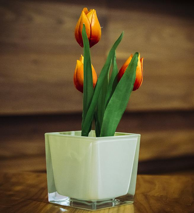 Free photo interior potted tulips decoration spring flowers max pixel tulips flowers potted decoration interior spring mightylinksfo