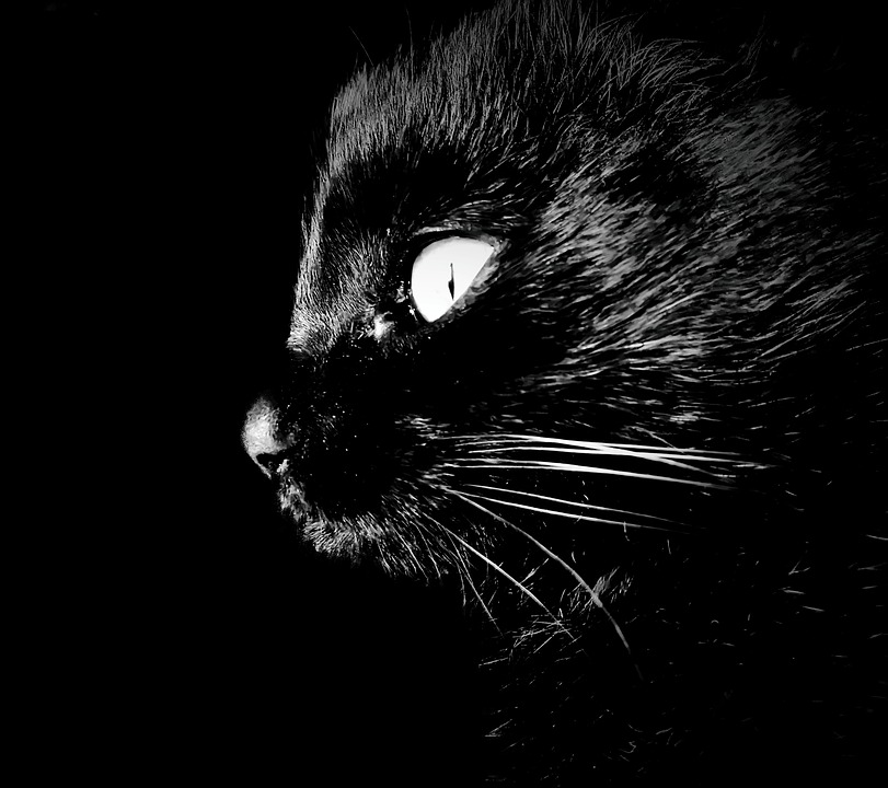 Cat, Intrigue, Darkness