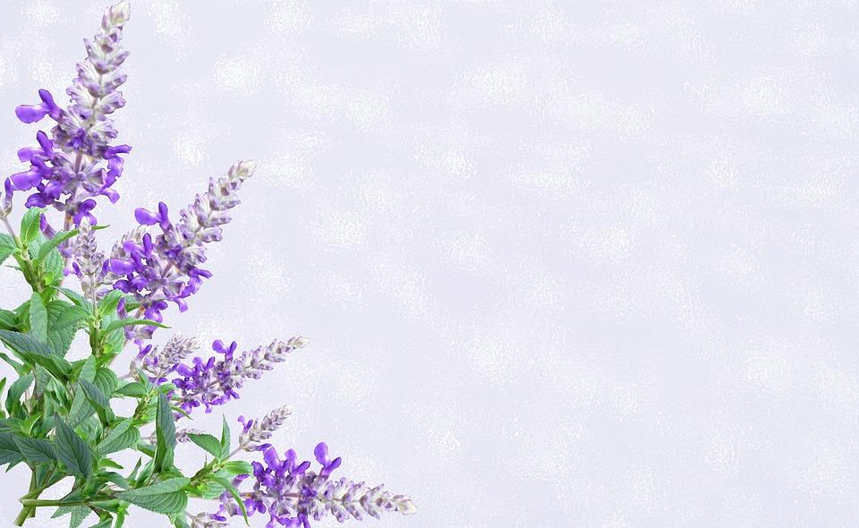 Greeting Card, Purple Flower, Invitation