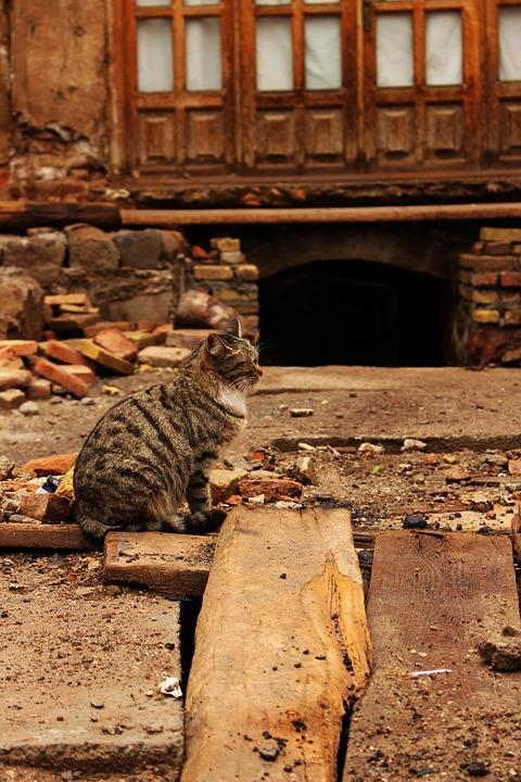 Cat, Animal, Iranian, Old, Abandoned