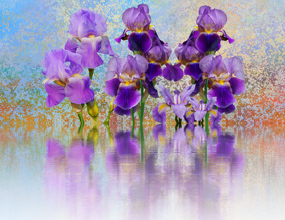 Iris, Flower, Schwertliliengewaechs, Dark Purple