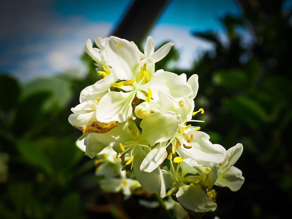 Zealand Iris, Iris, Plant, Flower, Blossom, Bloom