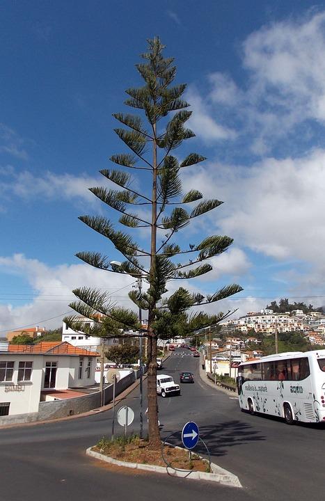 Madeira, Island, Funchal, Resort, Atlantic, Tree