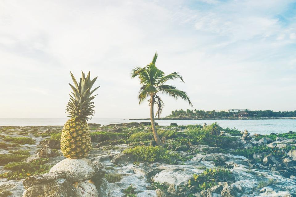 Beach, Coast, Fruit, Island, Ocean, Outdoors, Palm Tree