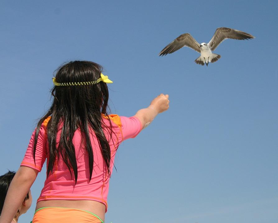 Sea Gull, Little Girl, Bird, Child, Beach, Sea, Island