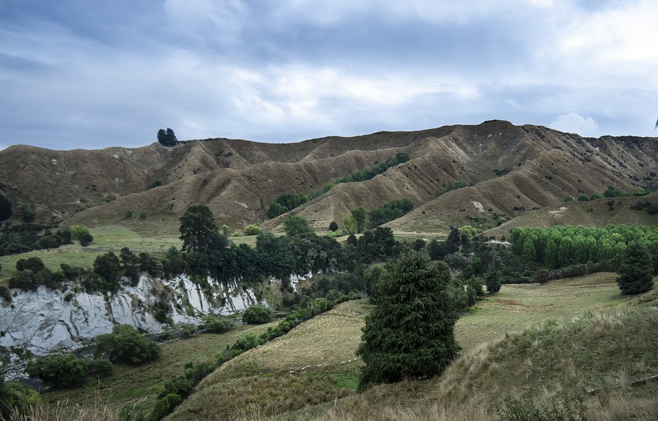 Hill, Country, Central North, Island, Nz