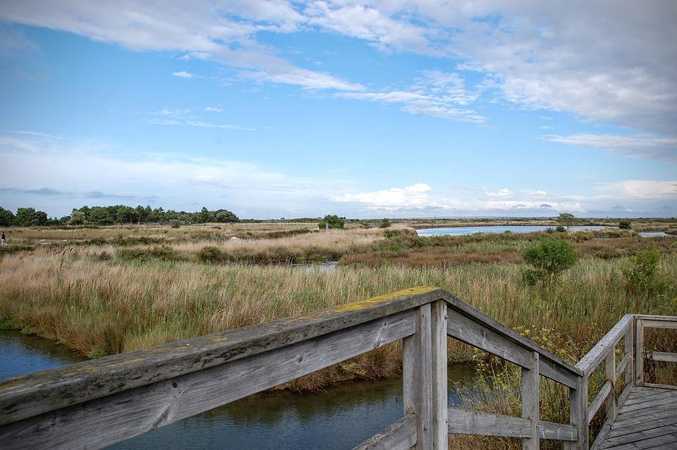 Marsh, Saline, Water, Island Of Oleron, Oléron, France