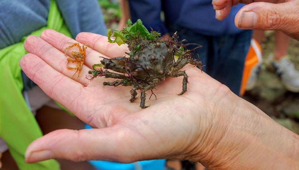 Crab, Island Of Oleron, Oléron, France, Sea, Island