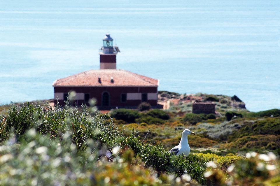 Lighthouse, Island, Seagull, Sea, Costa, Summer, Rocky
