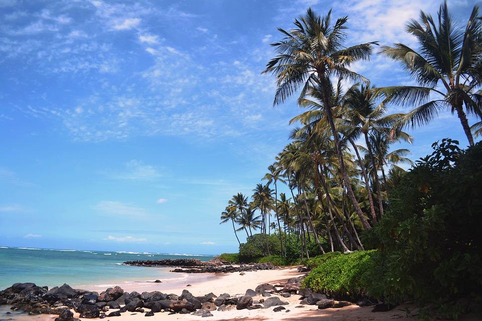 Beach, Palm, Sea, Tropical, Tree, Sand, Ocean, Island