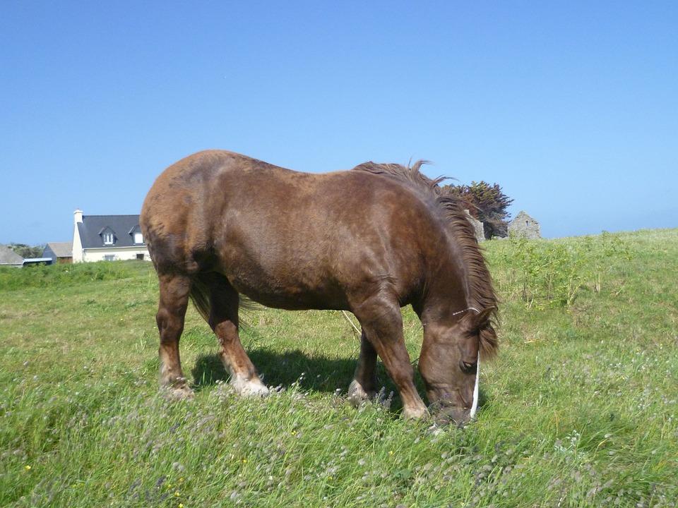 Isle Of Batz, Horse, Prairie