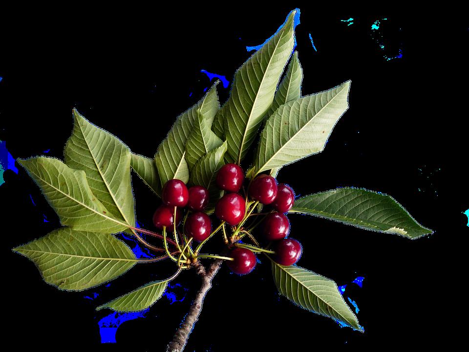 Cherries, Isolated, Fruit, Healthy, Frisch, Vitamins