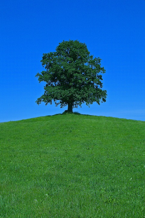Tree, Hill, Landscape, Nature, Scenic, Lonely, Isolated
