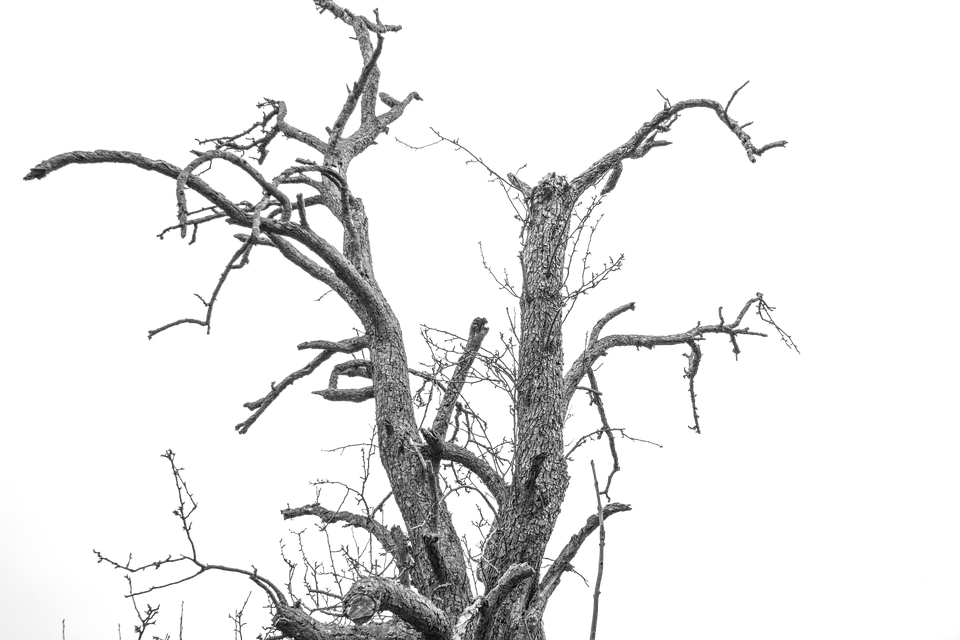 Isolated Tree, Cropping, Exemption, Isolated, Cut Out