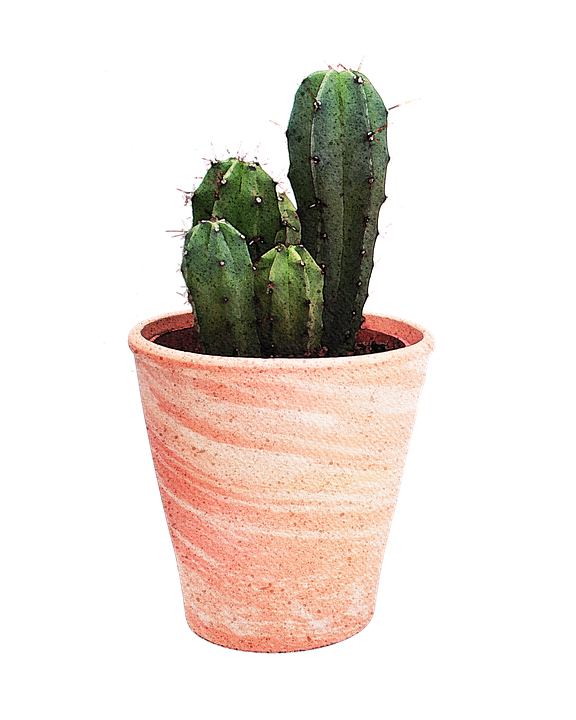 Cactus, Plant, Watercolor, Drawing, Clipart, Isolated