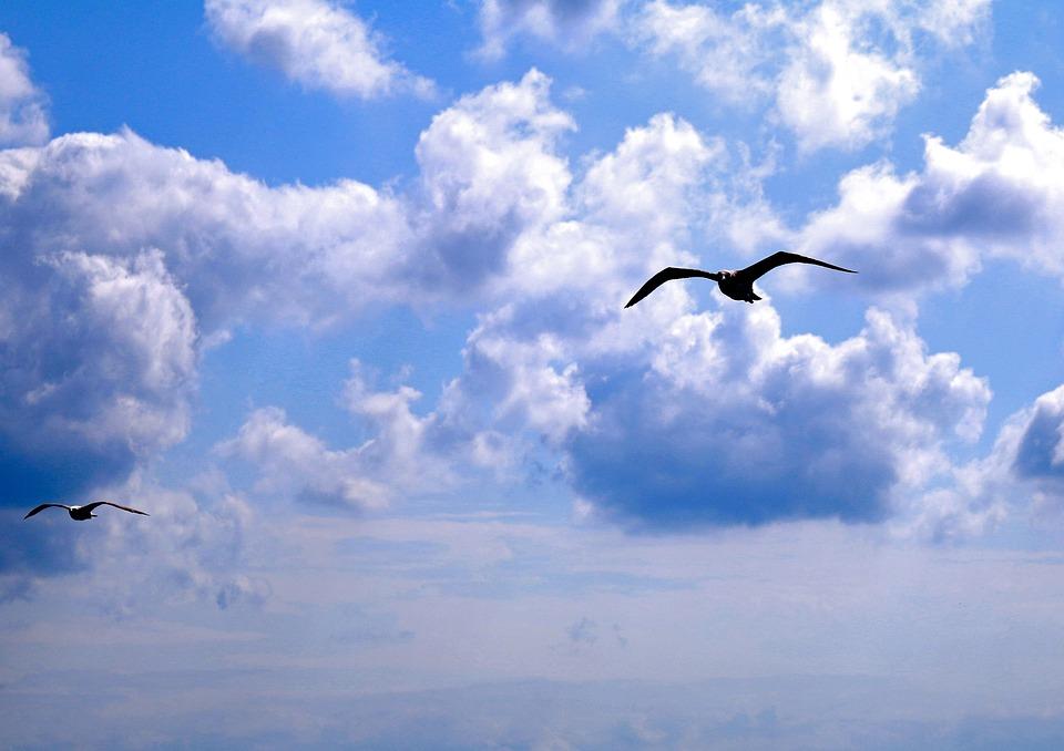 Seagull, Istanbul, Clouds, Bosphorus