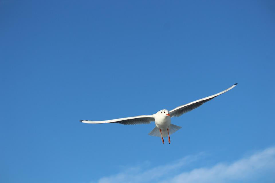 Seagull, Bird, Gulls, Flying, Fly, Wing, Sky, Istanbul