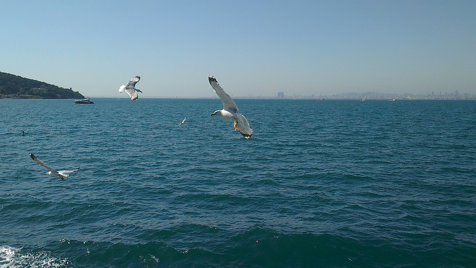 Turkey, Istanbul, Büyük Ada, Gulls, Wave, Water
