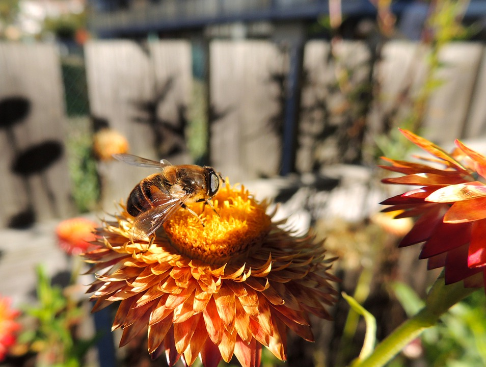 Fly, Bee, Flower, Nature, Italicum