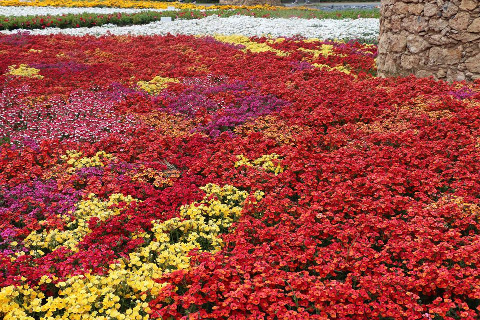 Free Photo Italy Flowers Summer Liguria Color Spring Colors Max Pixel