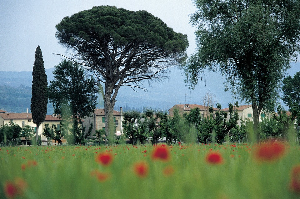Italy, Tuscany, Homes, Cornfield, Poppy, Pine, Cypress