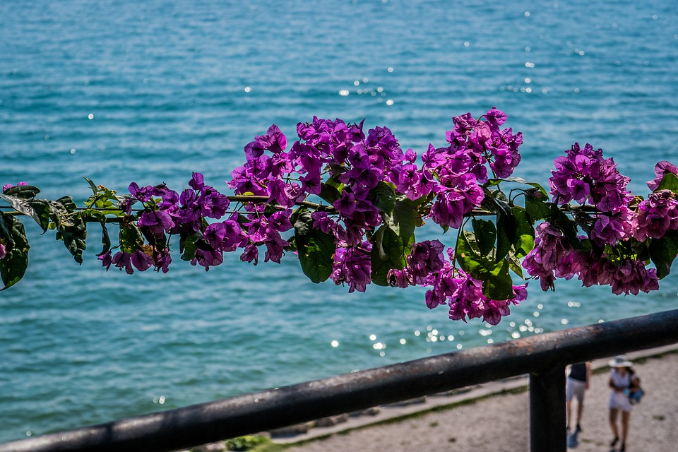Lake, Flowers, Tree, Water, Sirmione, Nature, Italy