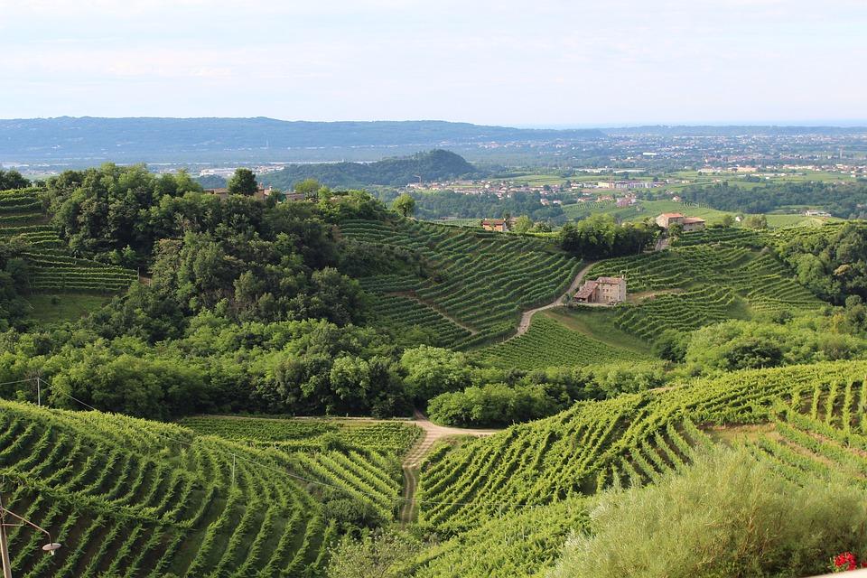 Italy, Treviso, Hills, Veneto, Wine, Vineyard