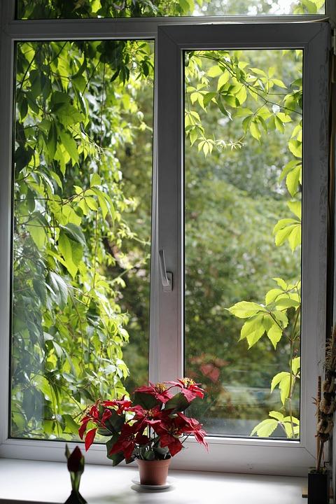 Window, Green, Shutter, Ivy, Shine Through, Window Sill