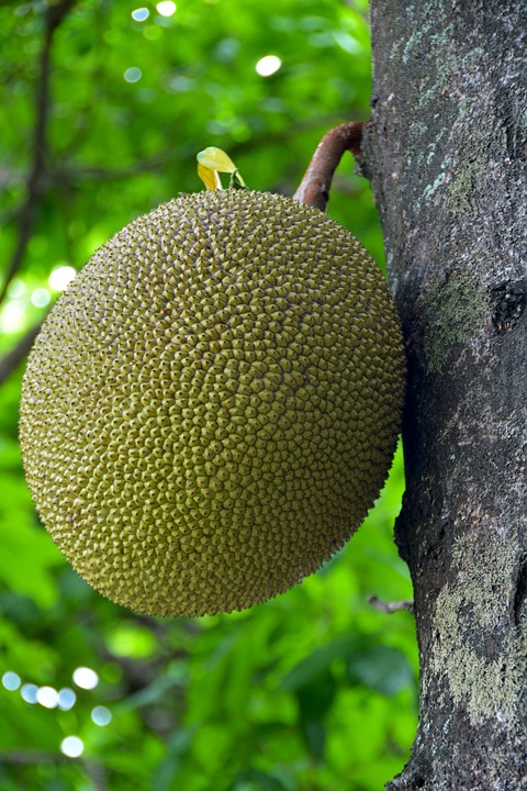 Jack Fruit, Thailand, Fruit, Tropical, Jakfruit, Asian