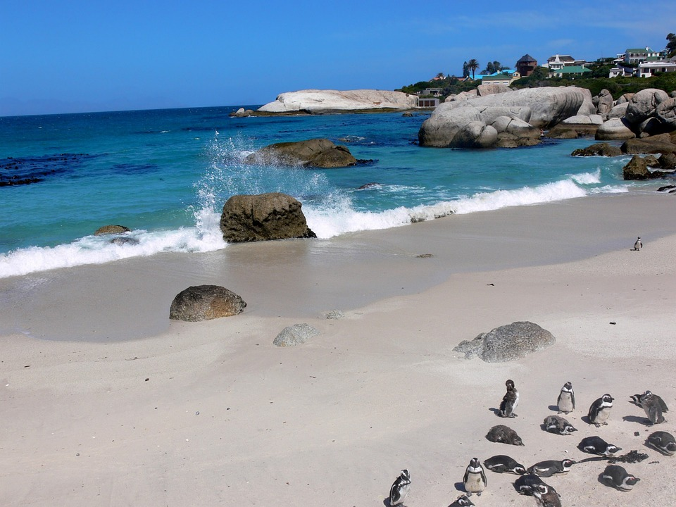 Penguin, Jackass Penguin, Sea Spray, Tropical, Sea