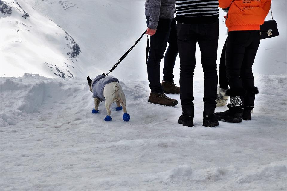 Dog, Conversation, On A Leash, Shoes, Jacket, Pants