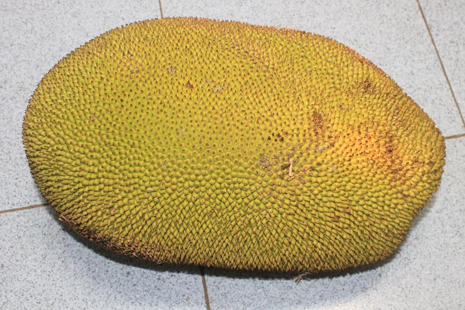 Jackfruit, Food, Indonesia, Asian