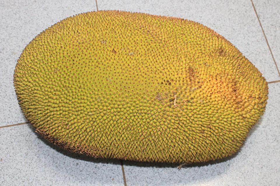 Jackfruit, Food, Indonesia, Asian
